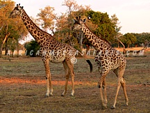 SAFARI PRICES & ITINERARIES